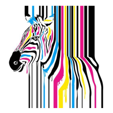 Standard Backdrop - Zebra w/Coloured Lines